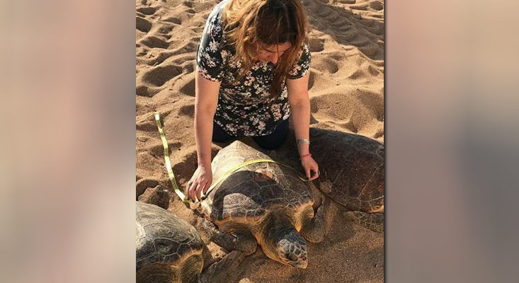 Four big-headed turtles returned to sea in Alexandria