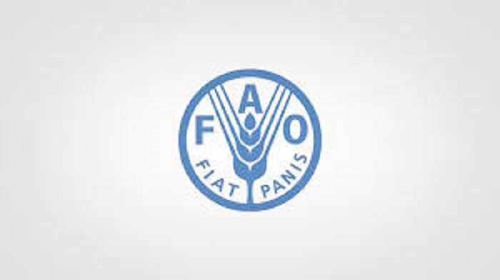Egypt elected Near East representative in FAO
